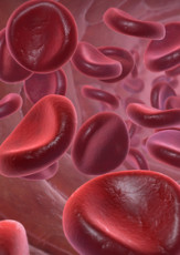 What's in Blood? A Look at Types of Blood Cells