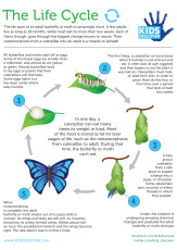 Infographic: The Life Cycle