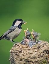 Science in the Backyard—Nesting Birds