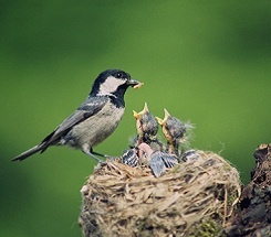 Science in the Backyard—Nesting Birds