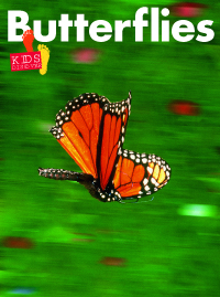 KD1: Butterflies