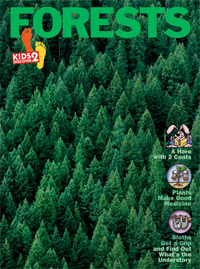KD2: Forests