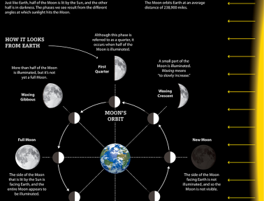 Infographic: Phases of the Moon
