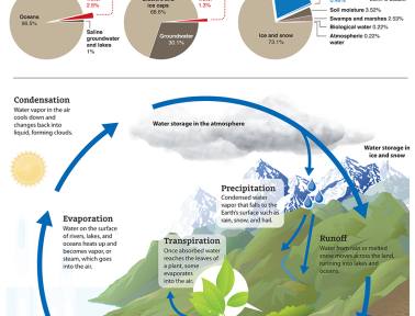 Infographic: The Water Cycle