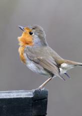 Citizen Science across the Curriculum—Celebrate Urban Birds