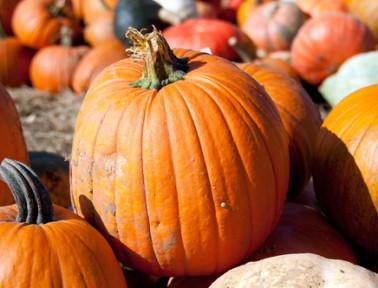 Teaching October